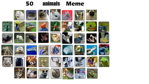 50 ANIMALS Meme by KoopaKidDS by Roses-and-Feathers