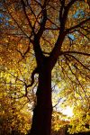 Autumn Tree by scotto
