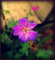 HEARTY GERANIUM IS THE NAME! by AudraMBlackburnsArt