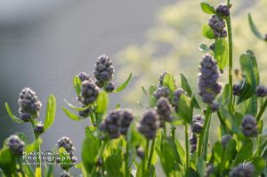 Un parmi les autres by Hieronimus-art