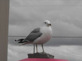 Up close with a seagull by Lady-Lilith0666