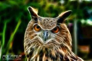 Rambo the Eagle Owl: Fractalius Re-Edit by nerdboy69
