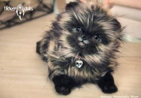 The Bead (the Pomeranian breed) by Flicker-Dolls