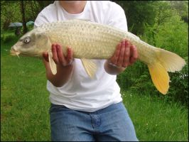 May 23rd - Ghost Carp by parry