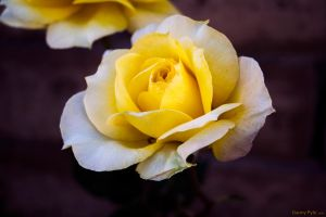 Yellowness by dannypyle