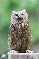 2012-70 Singing a Song by W0LLE