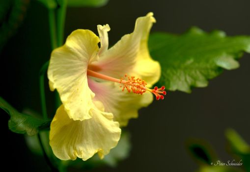 beauty.....yellow. by Phototubby
