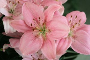 Pink Bunch by digitalpix4all