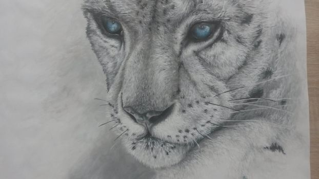 snow leopard  by ChrissiTime