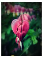 A Heart For You Because by Zevvey