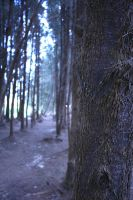 trees by indie-click