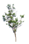 tree PNG by blur-stock