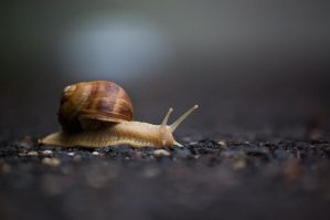 in hurry by torobala