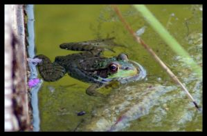 Froggy I by MillerTime30