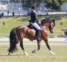 STOCK - Gold Coast Show 353 by fillyrox