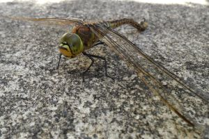 Dragonfly untangled. by Artist-KGH