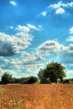 Corn Field HDR by MrDic