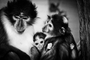 Family by lucyparryphotography