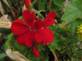 Gnawed Red Flowers by Toderico