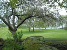 June in Maine by TheRedPlumBlossom