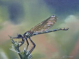 Banded demoiselle painting by Katie-Z