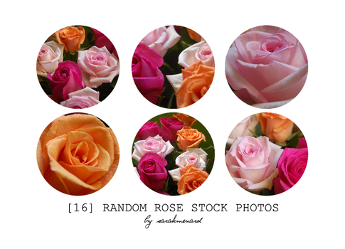 Rose Stock Photo Pack by SarahMenard