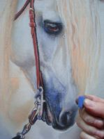 WIP 5 White Horse 2 by PASTELIZATOR