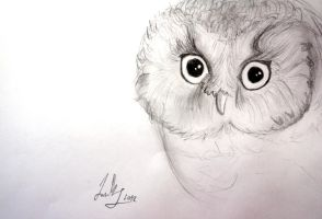 Owl by Luuky