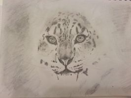 Snow Leopard by Stolzer