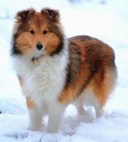 Dog in snow by cathy001