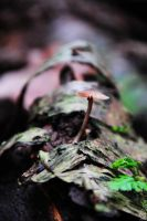 wood mushroom by FMpicturs