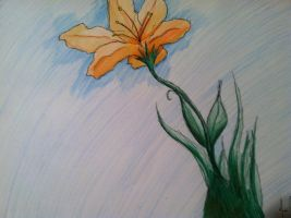 orange flower by aelita-tealeaf