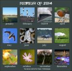 2014 Review by MrWitchblade