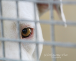 East Valley Animal Shelter 2 by Deliquesce-Flux