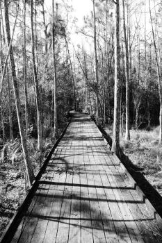 Boardwalk through the haunted forest by EricaGriswold
