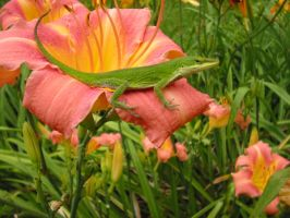 Lizard on Lily by Wolf-Daughter
