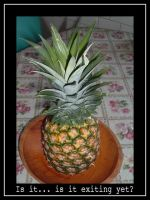 Pineapple by eichel