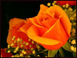 ORANGE ROSE 422 by THOM-B-FOTO