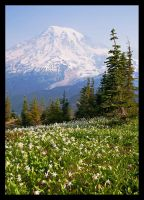 Carpet of Flowers by hikester