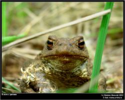 Toad with flowers by firework