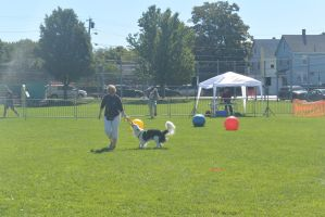 2014 Dog Festival, Treiball Session 9 by Miss-Tbones