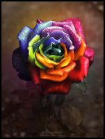 Rainbow Dream Rose II by Lilyas