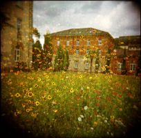 blumenmeer by zuckerfuss