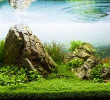 My Aquascape by thorn-pl