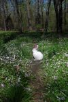 Here comes Peter Cottontail by InKibus