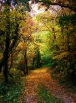 Days Of Autumn II by Ibilicious