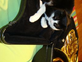 French Horn? by MissyMoizy