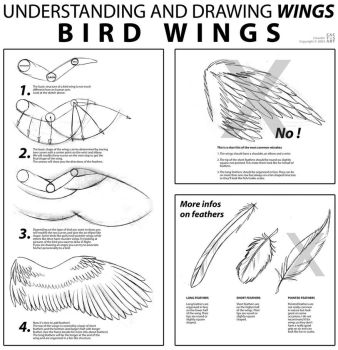 Bird Wings Tutorial by joanniegoulet