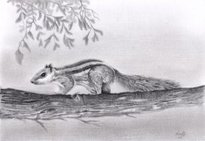 Squirrel on branch by aakritiarts