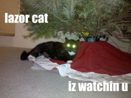 Another lolcat by Peeka13